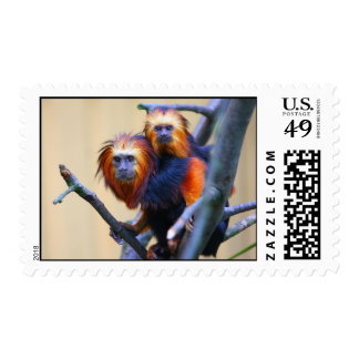 Golden Headed Lion Tamarin Stamps