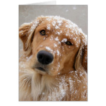 Golden Holidays and a Dog-gone happy New Year Card
