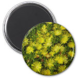 Golden Ice Plant Yellow Flowers Magnet