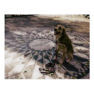 "Golden in Strawberry Fields aka ""Imagine"" Postcard"