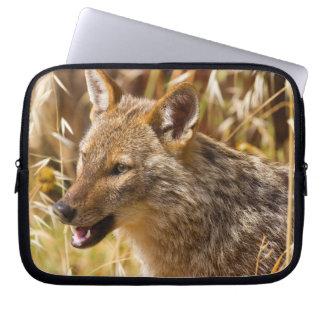 Golden Jackal Canis Aureus Computer Sleeves