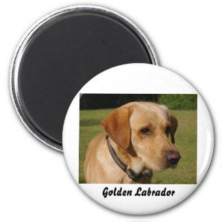 Golden Labrador Magnet