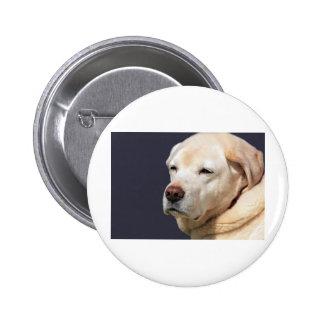 golden labrador pin