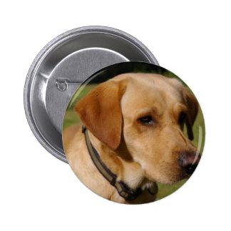 Golden Labrador Pinback Buttons