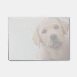 Golden Labrador Puppy (8 Months Old) Post-it® Notes