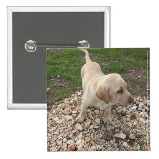 Golden Labrador Puppy Pins