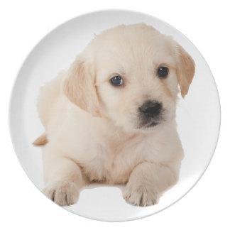Golden Labrador Puppy Dinner Plate
