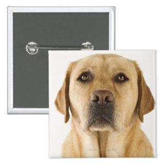Golden Labrador Retriever (Canis familiaris). Pinback Buttons
