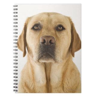 Golden Labrador Retriever (Canis familiaris). Notebook