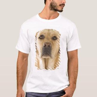 Golden Labrador Retriever (Canis familiaris). T-Shirt