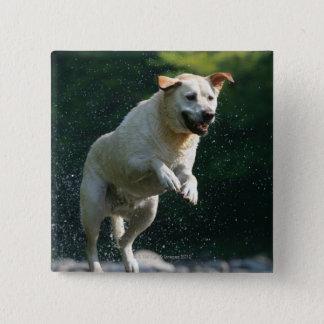 Golden Labrador Retriever jumping into river Button