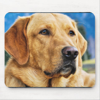 Golden Labrador Retriever Mouse Pad