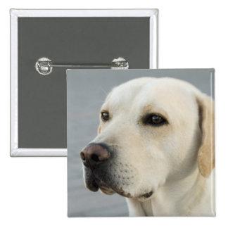 Golden Labrador Retriever Photograph 2 Inch Square Button