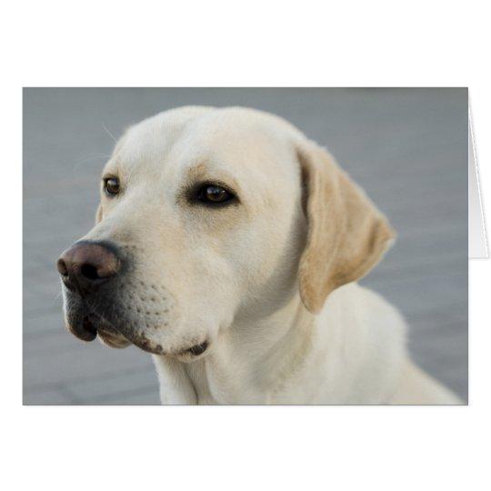 Golden Labrador Retriever Photograph Card