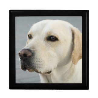 Golden Labrador Retriever Photograph Jewelry Box