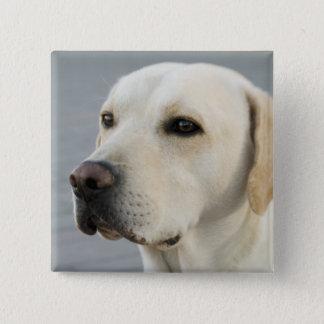 Golden Labrador Retriever Photograph Pinback Button