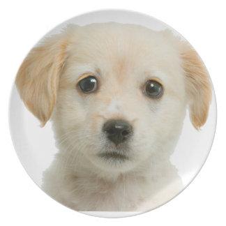 Golden Labrador Retriever Puppy Plate