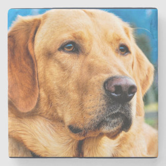 Golden Labrador Retriever Stone Coaster