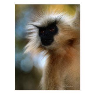 Golden langur (Prebytis geei) close up, Manas Postcard