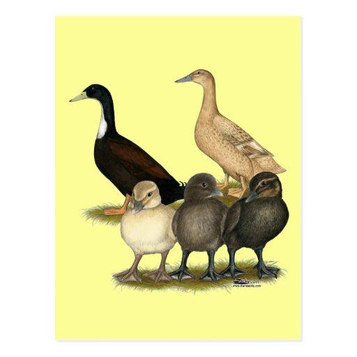 Golden Layer Duck Family Postcard