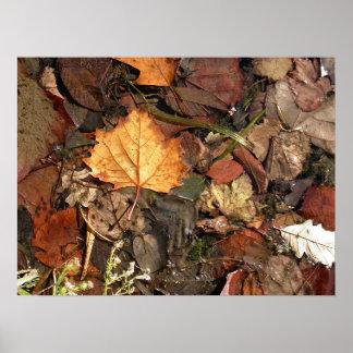 Golden Leaf Poster