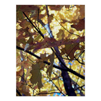 Golden Leaves of Autumn Poster