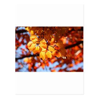 Golden Leaves Postcard