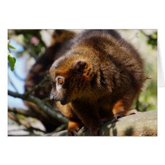 Golden Lemur Card