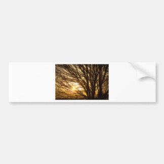 Golden Light Shining Through Bumper Sticker