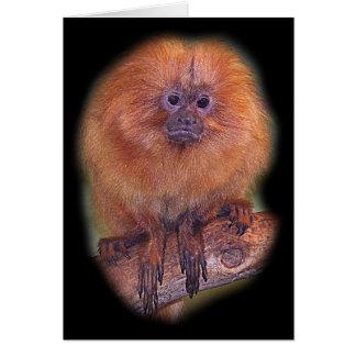 Golden Lion Tamarin, Golden Marmoset Monkey Brazi Card