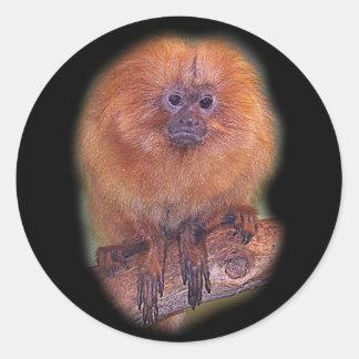 Golden Lion Tamarin, Golden Marmoset Monkey Brazil Classic Round Sticker
