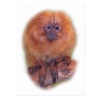 Golden Lion Tamarin, Golden Marmoset Monkey Brazil Postcard