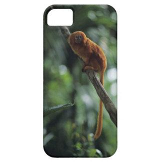 Golden lion tamarin (Leontopithecus rosalia) iPhone SE/5/5s Case