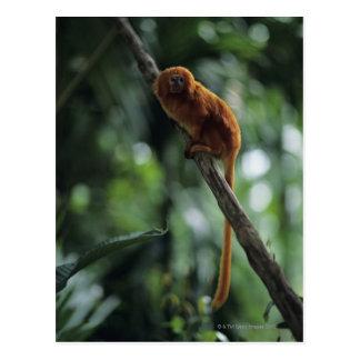 Golden lion tamarin (Leontopithecus rosalia) Postcard