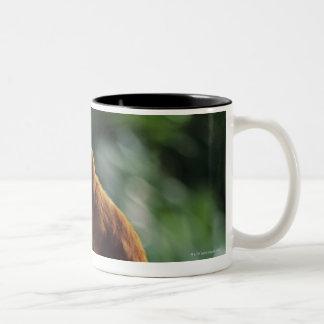 Golden lion tamarin (Leontopithecus rosalia) Two-Tone Coffee Mug