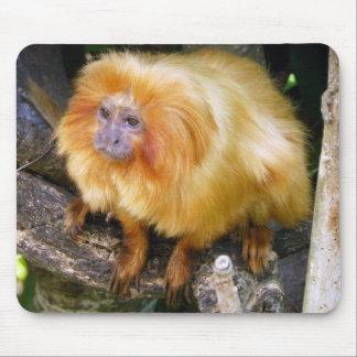 Golden Lion Tamarin Mouse Pad