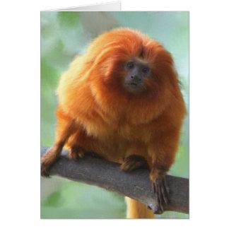 Golden-Lion Tamarin Note Cards