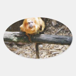 Golden Lion Tamarin Oval Sticker