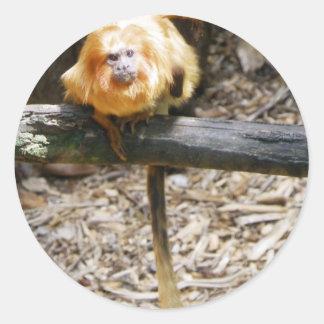 Golden Lion Tamarin Classic Round Sticker