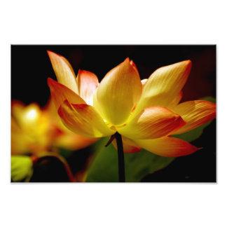 Golden Lotus Photo Print