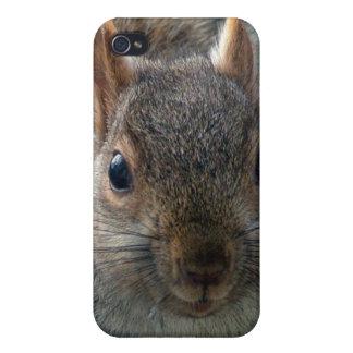 Golden mantled ground squirrel iPhone 4/4S case