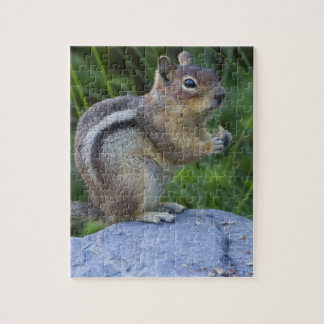 Golden Mantled Ground Squirrel Jigsaw Puzzle
