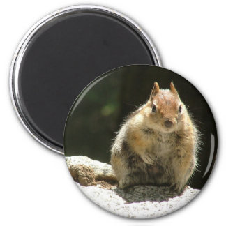 Golden mantled ground squirrel refrigerator magnets