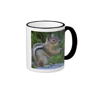 Golden Mantled Ground Squirrel Mugs
