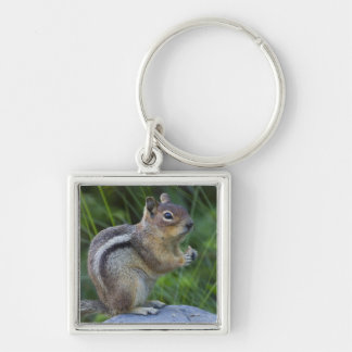 Golden Mantled Ground Squirrel Silver-Colored Square Keychain