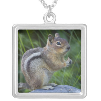 Golden Mantled Ground Squirrel Silver Plated Necklace