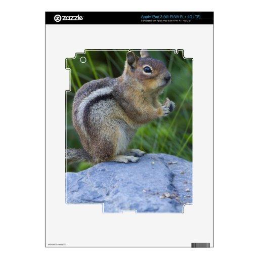 Golden Mantled Ground Squirrel Decals For iPad 3