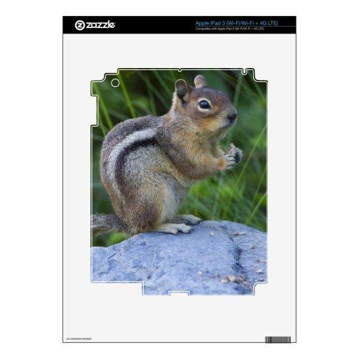 Golden Mantled Ground Squirrel iPad 3 Decals