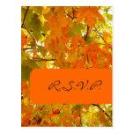 Golden Maple, RSVP postcards, for 5x7 invites Postcard