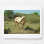 Golden Mare Mouse Pad